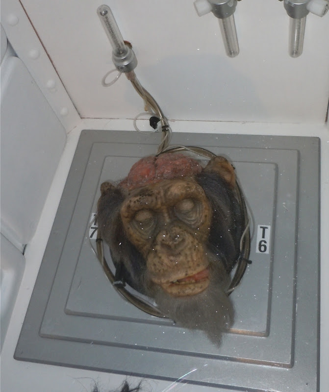 Chimp head prop 28 Days Later