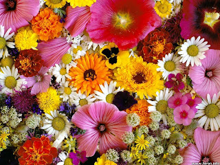 iPhone interflora Apps