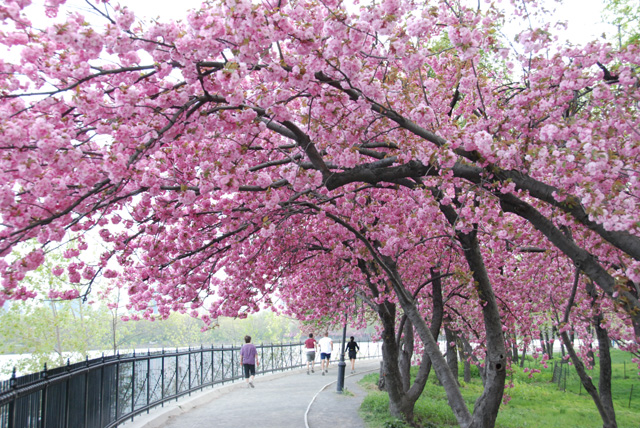 Travel Adventure Cherry Blossoms