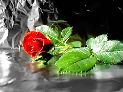 red rose HD image