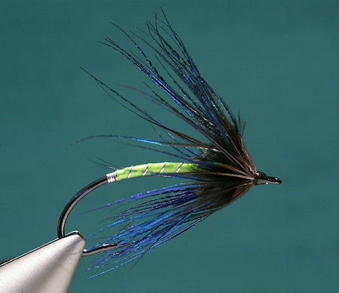 Joel La Follette's Peacock Spyder