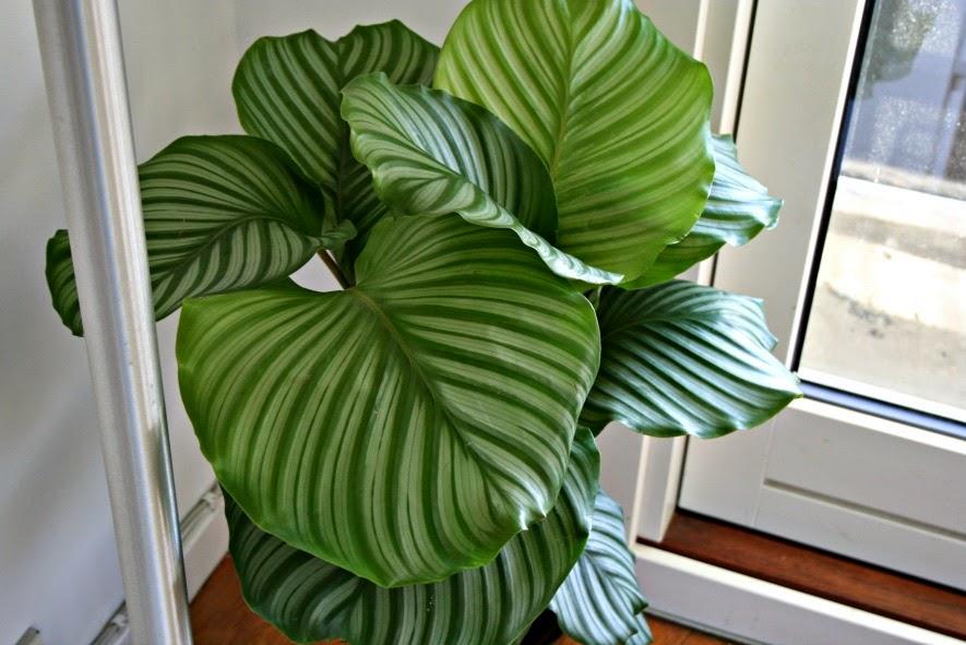 stor grønn plante