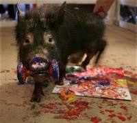 Potbellied pig wrecking things