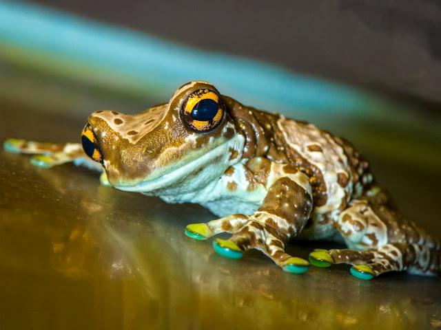 "<img src=""http://1.bp.blogspot.com/-jmV8ycBtPk0/Uq9gZl-bNRI/AAAAAAAAFwM/V5eEuyZbe_s/s1600/353.jpeg"" alt=""Frogs Animal wallpapers"" />"