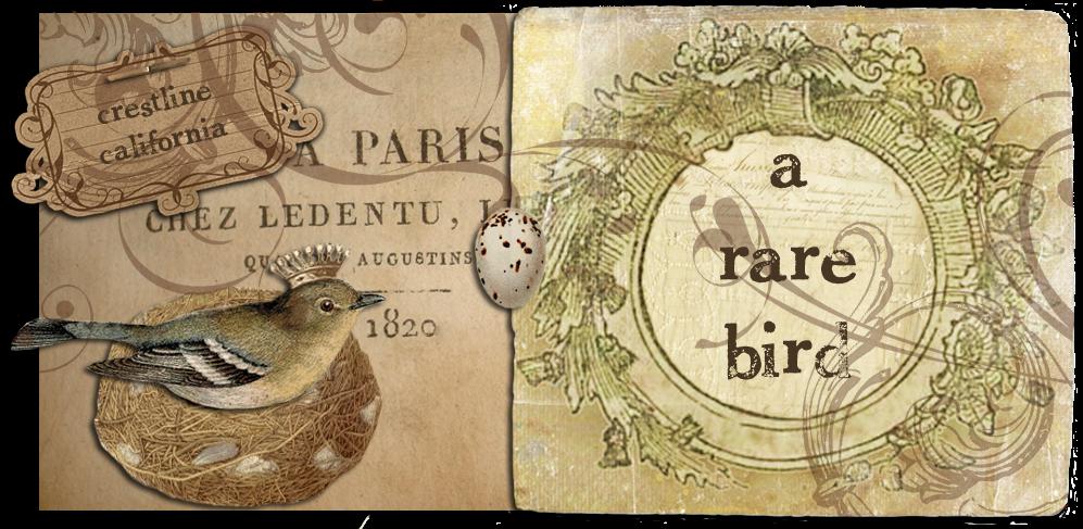 A Rare Bird