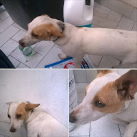 cane femmina adozione piccola taglia Caserta