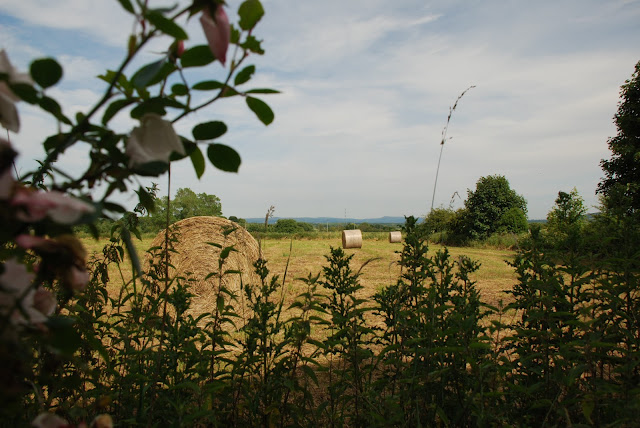 a view of hay bales
