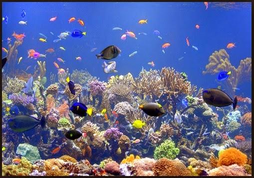 Jacksonville aquarium and fishing reports aquarium sea for Spring water for fish tank