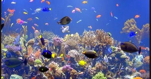Jacksonville Aquarium And Fishing Reports Aquarium Sea