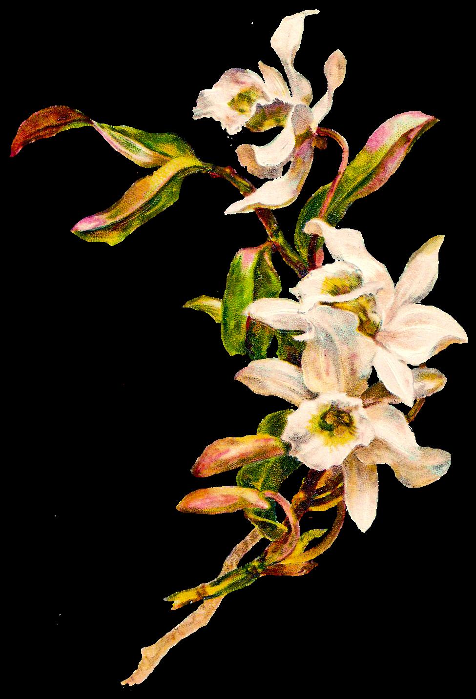 Picture files with transparent backgrounds flowers - batman lego 128x160 wallpaper