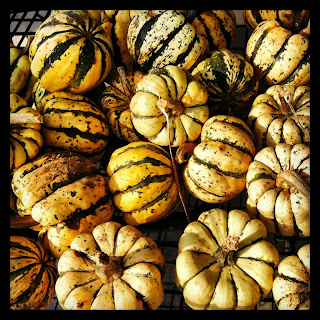 Farm Fresh Winter Squash