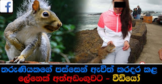 squirrel-arrested-bother-to-woman