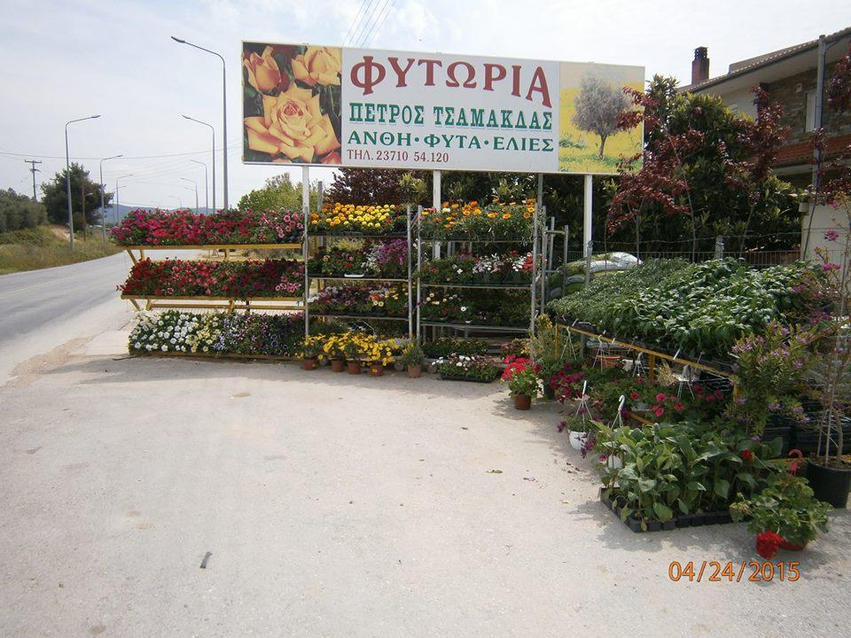 Φυτωρια Πετρος-Νιτσα Τσαμακδα
