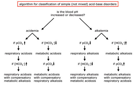 the western resident: a case a metabolic acidosis, Skeleton