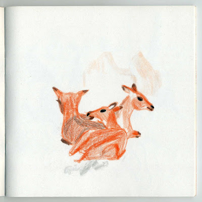 illustration animaux biche