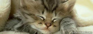 Capas para Facebook, gatinho fofo dormindo