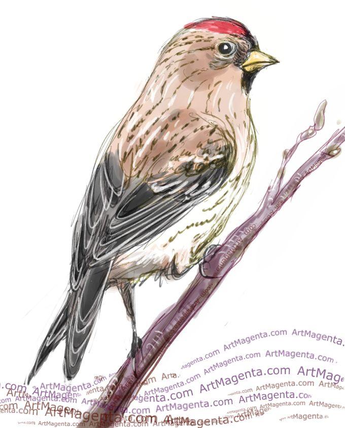 Gråsiska är en fågelmålning av ArtMagenta