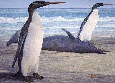 pinguinos prehistoricos Kairuku