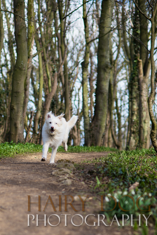 Specialist dog action photography at hawthorn dene