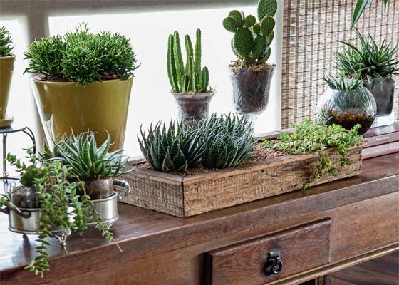 como cuidar de plantas dentro de casa verde em folha