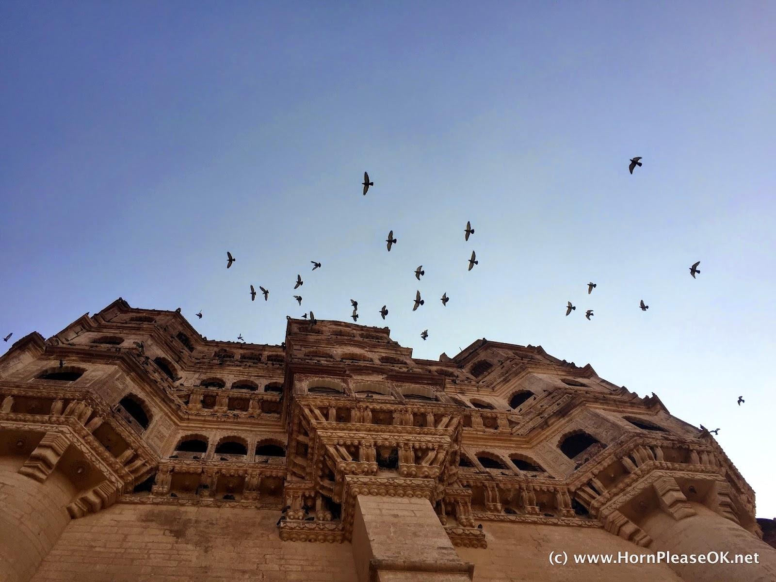 Pigeons take flight from the windows of Mehrangarh Fort