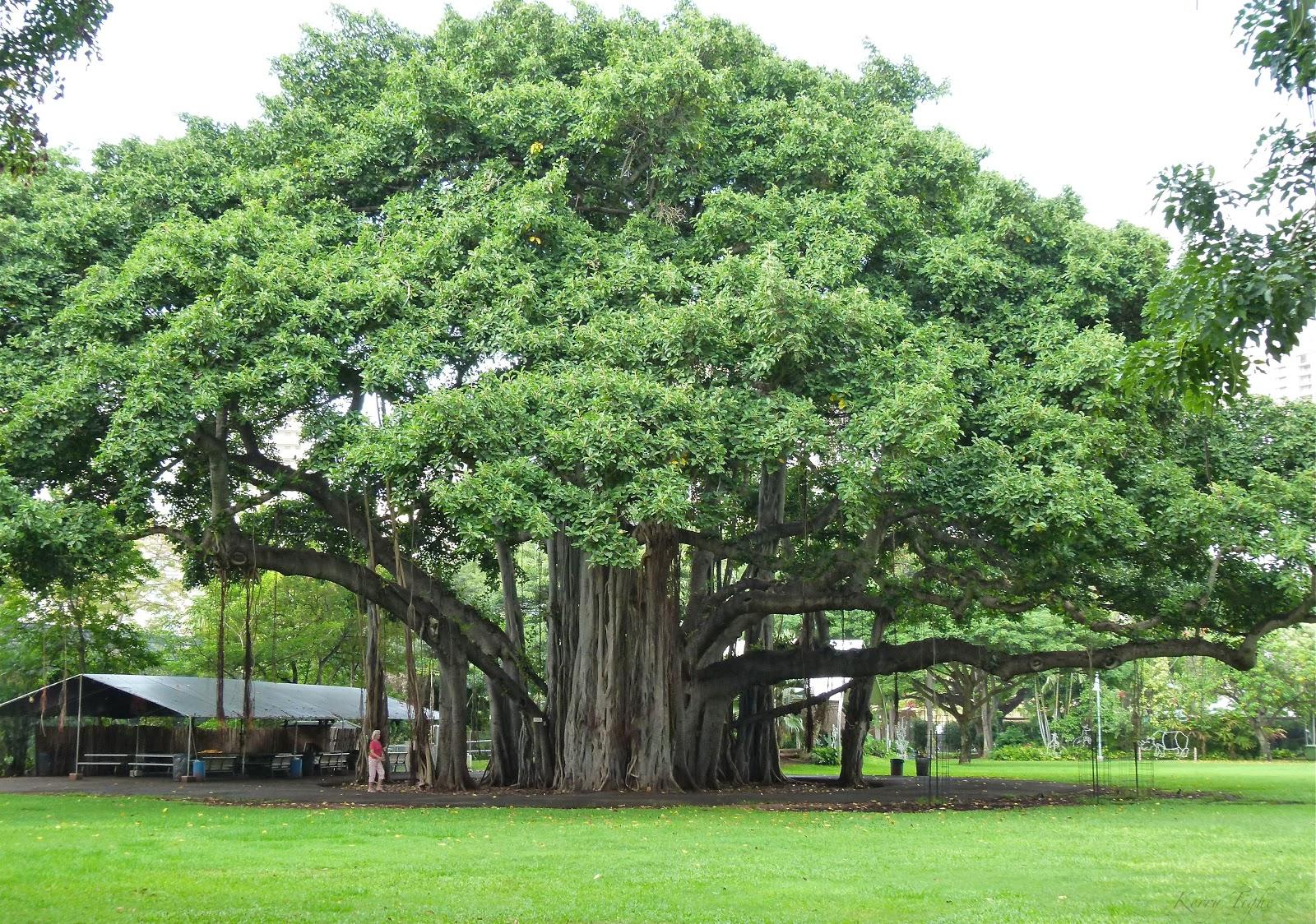 ARTipelago: Beautiful Banyan Trees - 805.2KB