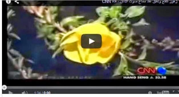 زهور تتفتح وتغلق عند سماع صوت الأذان - فيديو قناة CNN