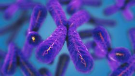 Wissenschaftler kehren zu ersten Mal das Alter von weissen Blutkörperchen bei einer Frau um!
