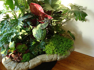 Plants are alive feng shui wind water - Plants for good feng shui ...