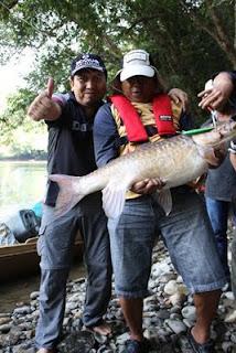 Pak Dudit Taklukan Red Mahseer 12 kg