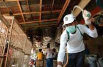 Penyakit flu burung pada ayam dan manusia