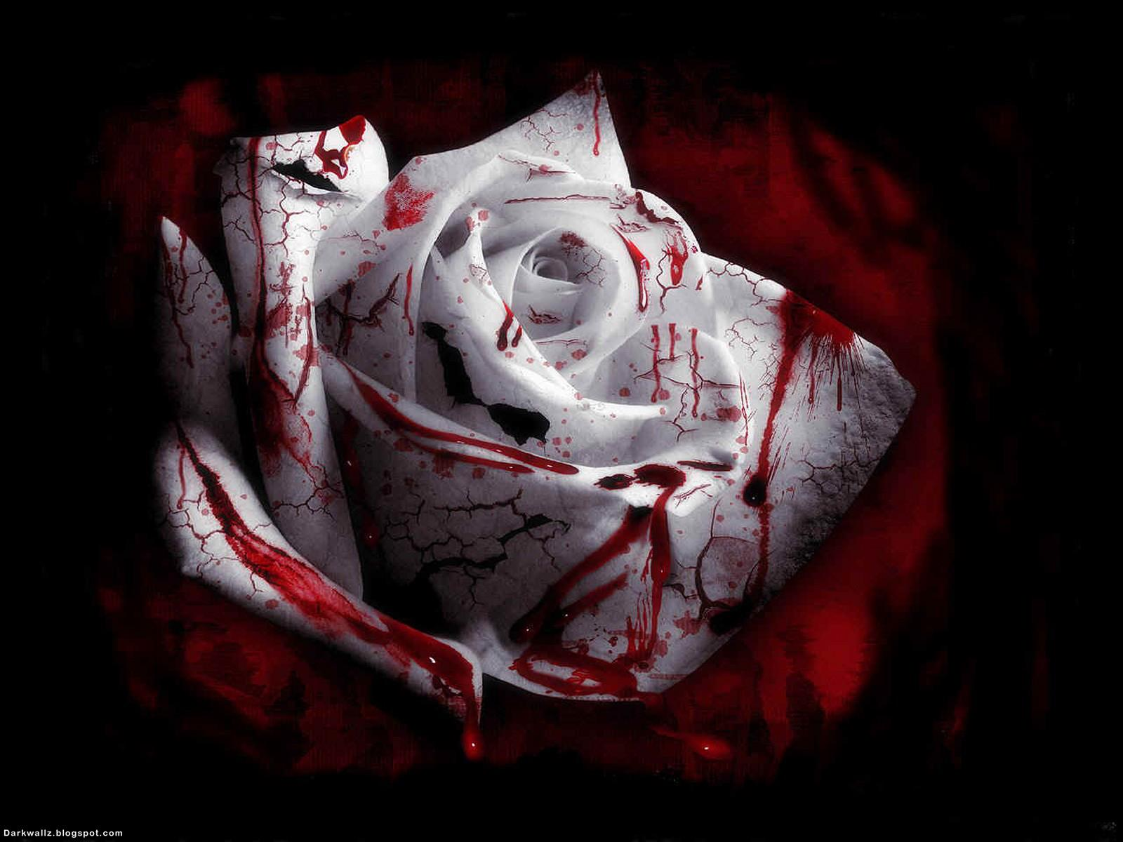 Gothic White Blood Rose Wwallpaper