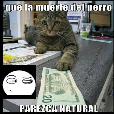 El gato mafioso