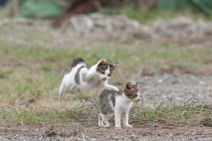 Japan S Cat Heaven Island