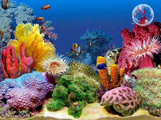 hd wallpaper tropical. animated aquarium wallpaper.