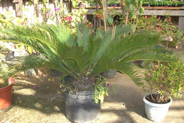 plantas de jardim lista : plantas de jardim lista:Abaixo imagens de plantas ornamentais: