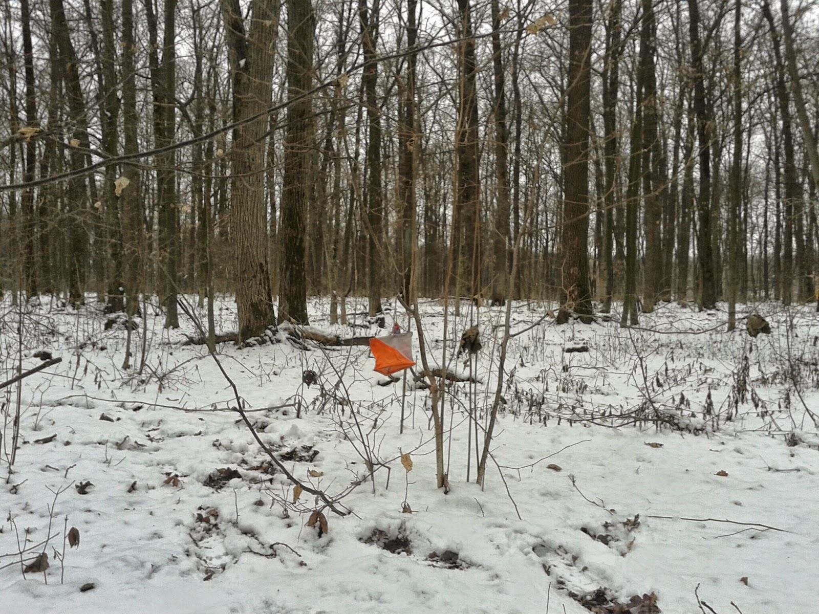 тренировка охота на лис