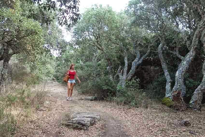 chêne-liège en Sardaigne
