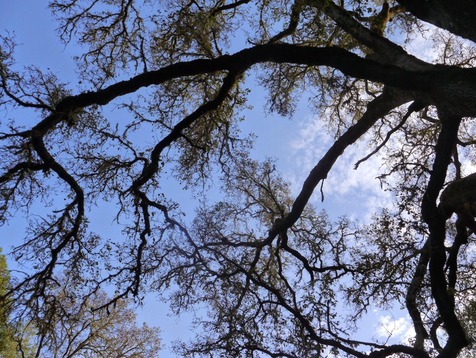 the black walnut tree by mary oliver essay