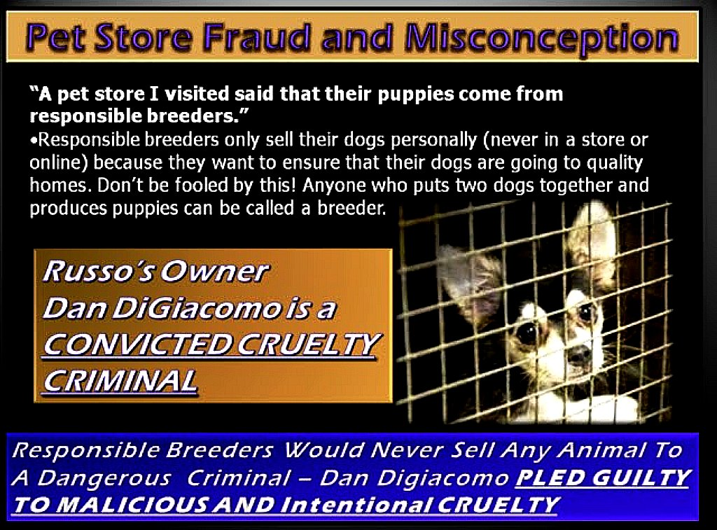 GOLD AND PURPLE PUPPY PLED GUILTY