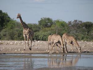 Tsumeb is naby die Etosha Wildtuin in die Noorde van Namibië