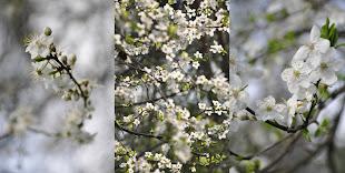 wiosna tendomowa