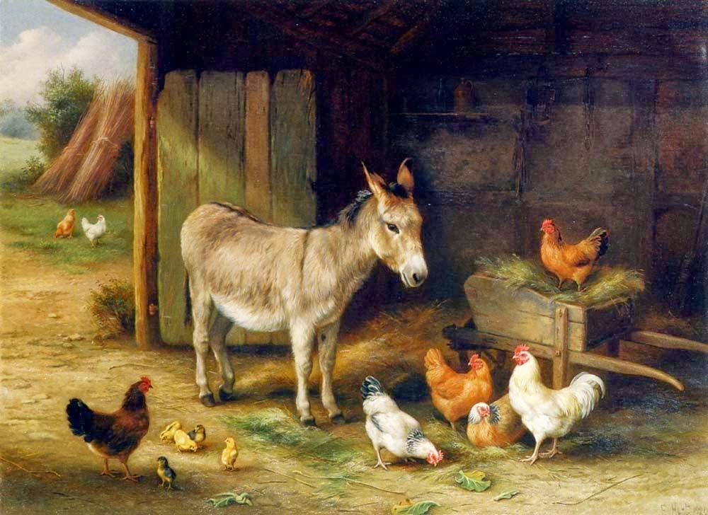 ayam dan keledai