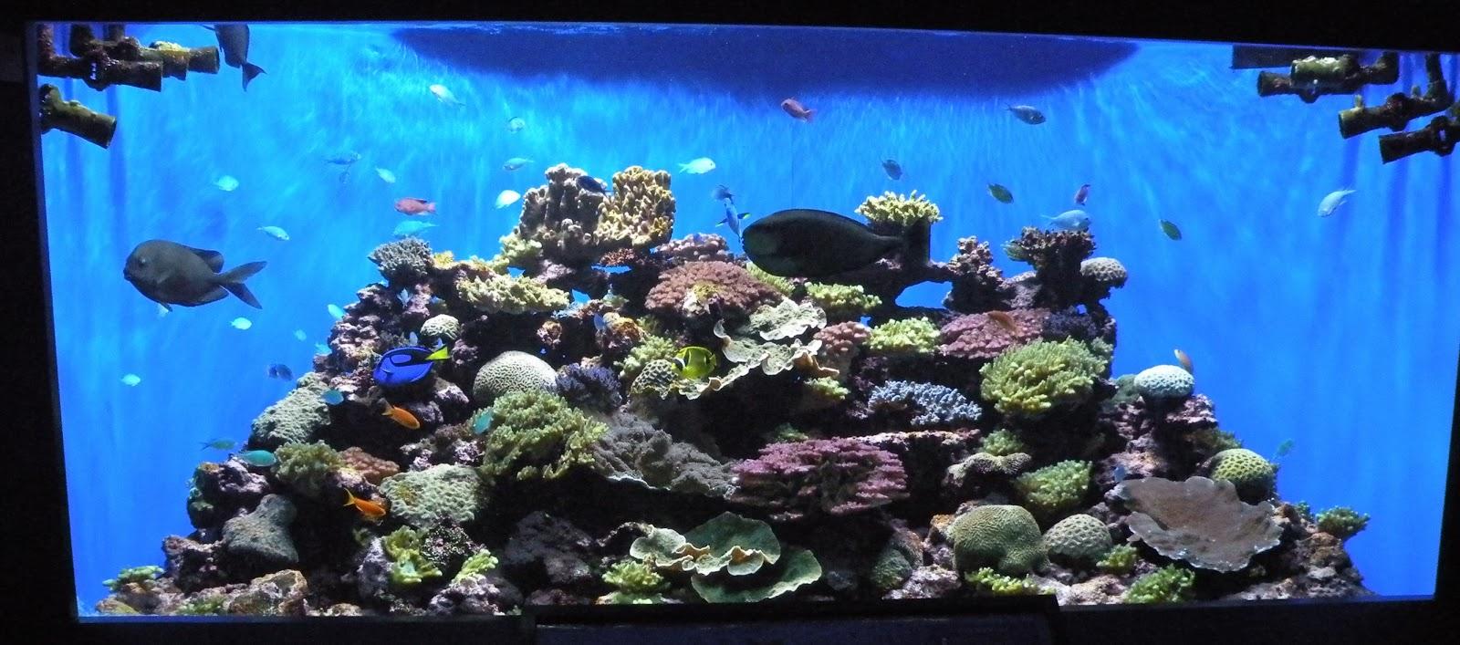 Pilgrimage 2013 Birch Aquarium Part 2 Inside