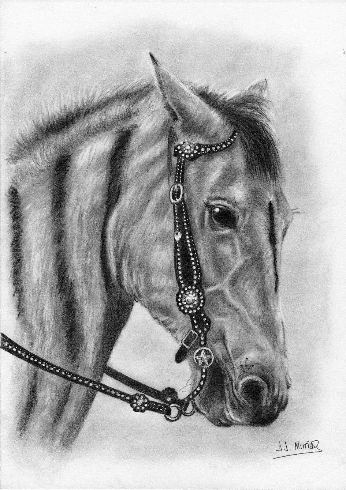 Cabeza de caballo dibujo realizado a lpiz de grafito  muestroArte