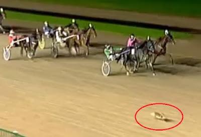 conejo gana carrera de caballos