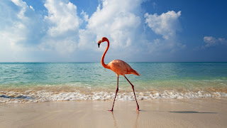 Flamingo Sea Landscape Nature Bird Water Beach Clouds HD Wallpaper