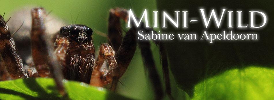 Mini-Wild