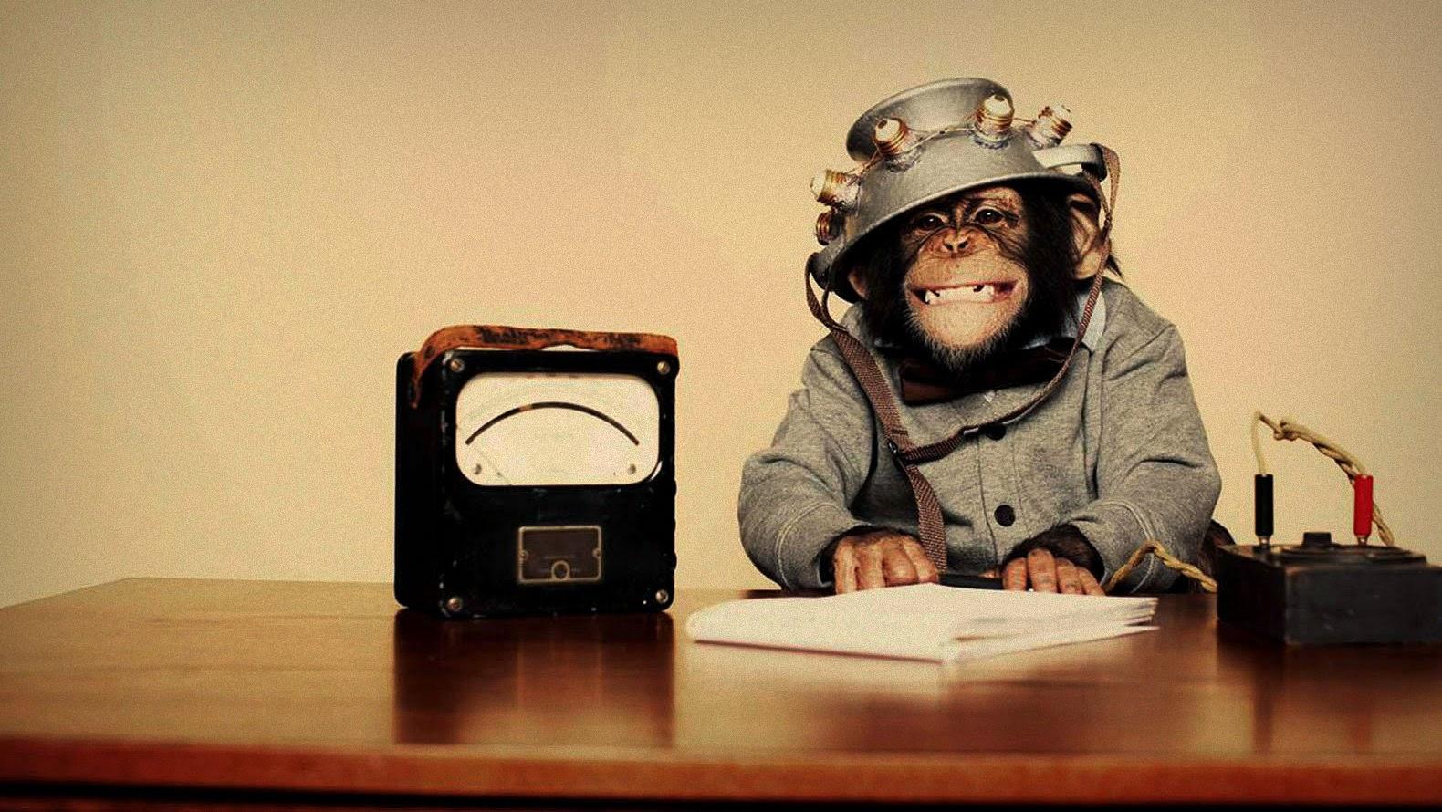 190220131044-monyet-pinter.jpg
