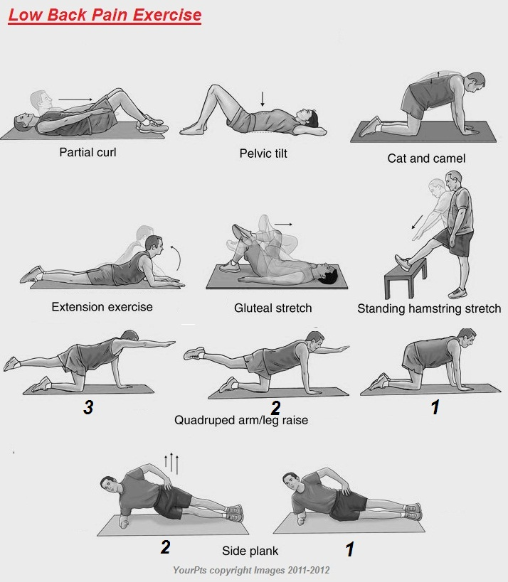 Lower Back Physical Therapy Exercises